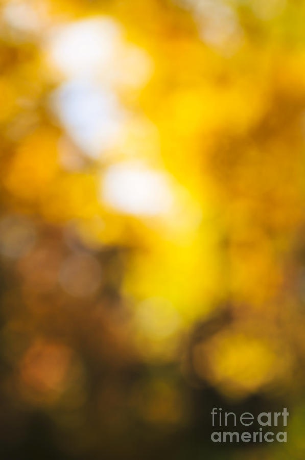 Nature Photograph - Sunny Fall Forest by Elena Elisseeva