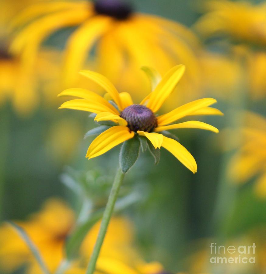 Sunny Photograph - Sunny Flower - 2 by Marilyn West