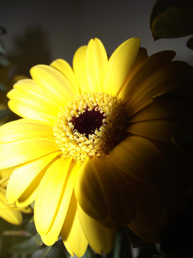 Flower Photograph - Sunny Flower by Coral Dudley