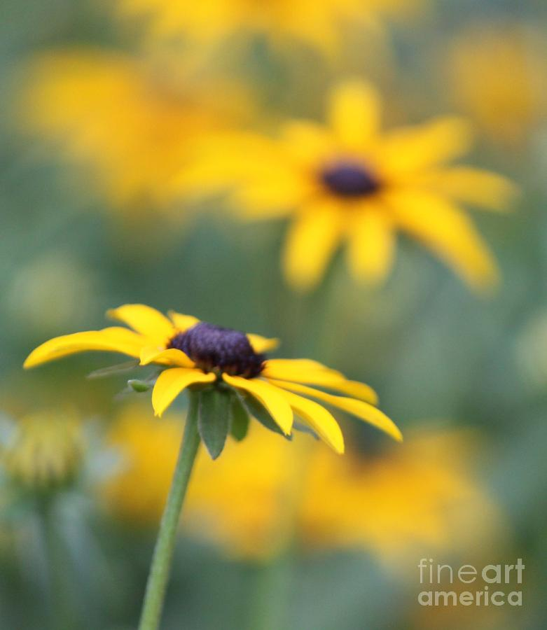 Yellow Photograph - Sunny Flower by Marilyn West