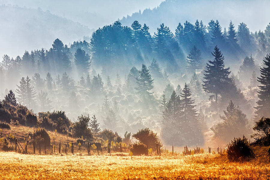 Bulgaria Photograph - Sunny Morning by Evgeni Dinev
