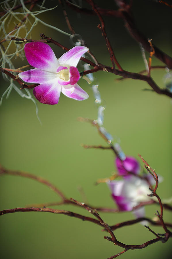 Flower Photograph - Sunny Orchid by Brandon McNabb