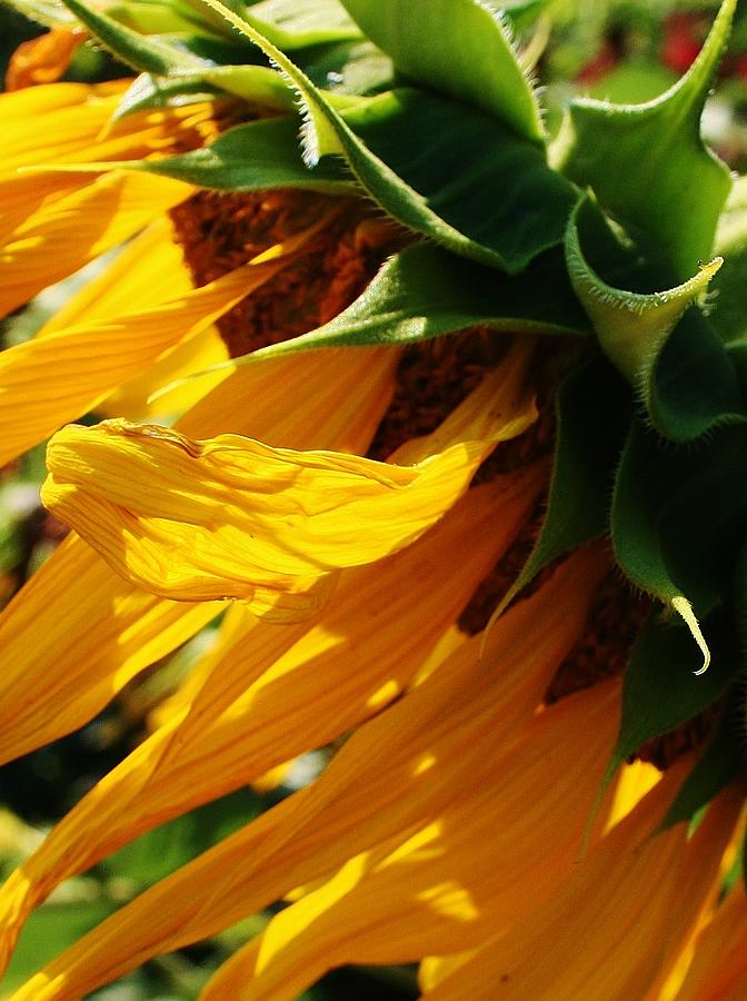 Flora Photograph - Sunny Times by Bruce Bley