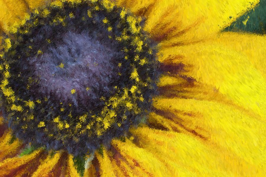 Flower Photograph - Sunny Yellow by Heidi Smith