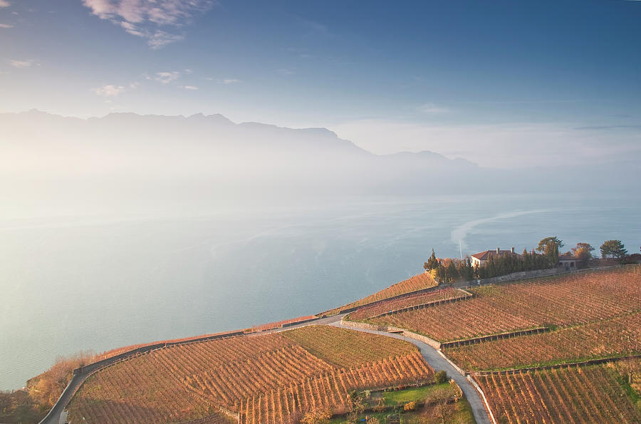 Horizontal Photograph - Sunrise At Lavaux Vineyard Terraces by Harris Photography
