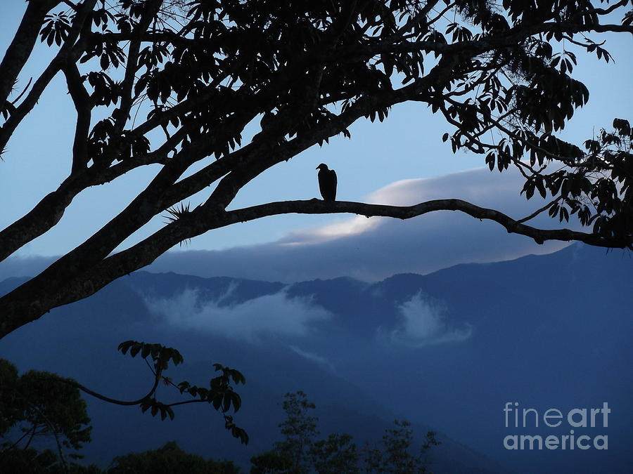 Wildlife Photograph - Sunrise At Talari Lodge by Heather Jett