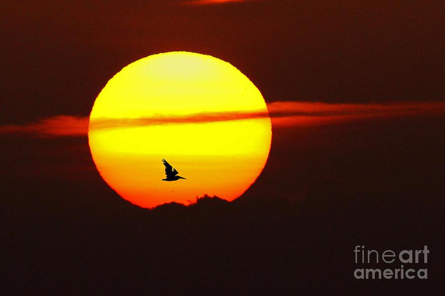 Sunrise Photograph - Sunrise Flight by Rick Mann