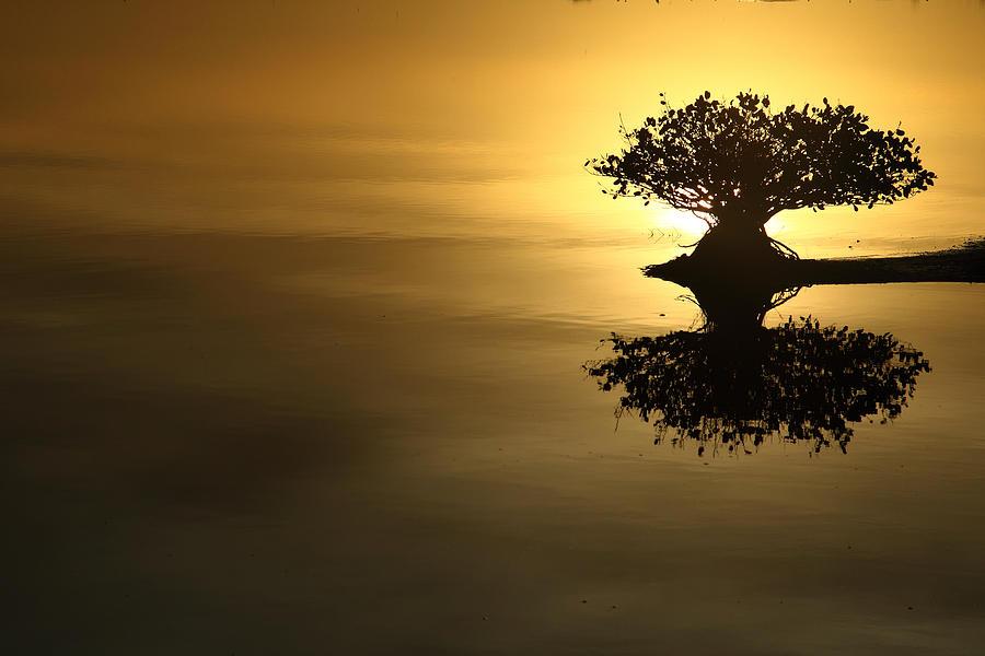 Sunrise Photograph - Sunrise Reflection by Rick Mann