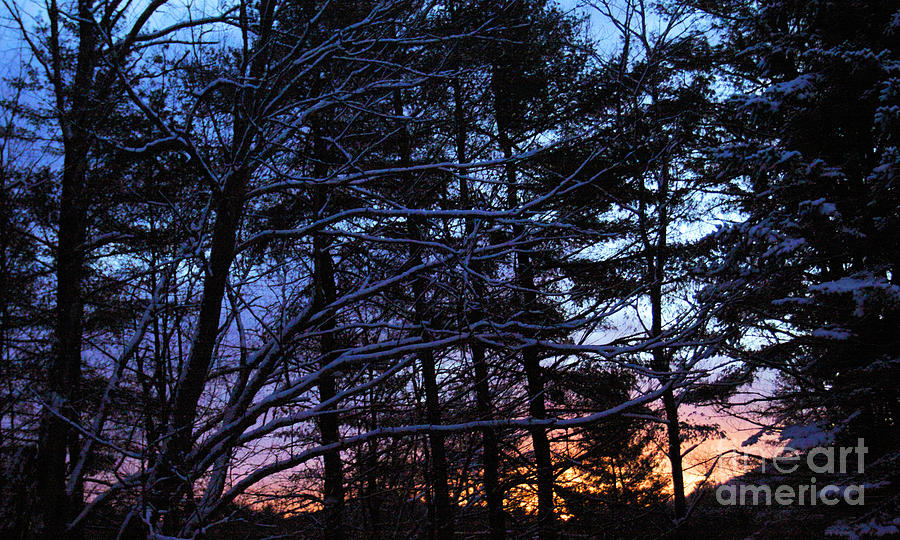 Landscape Photograph - Sunrise Through the Trees by Christine Segalas