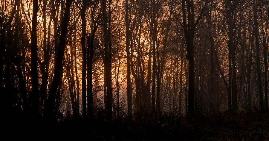 Sunrise Photograph - Sunrise Through Trees by Shawn Zimmerman