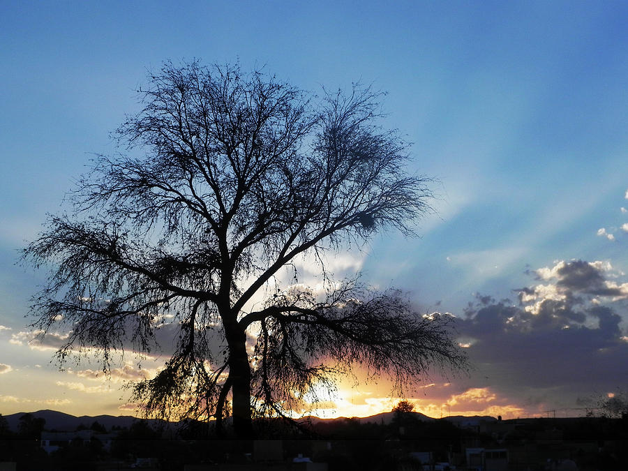 Tree Photograph - Sunset 8 by Jesus Nicolas Castanon