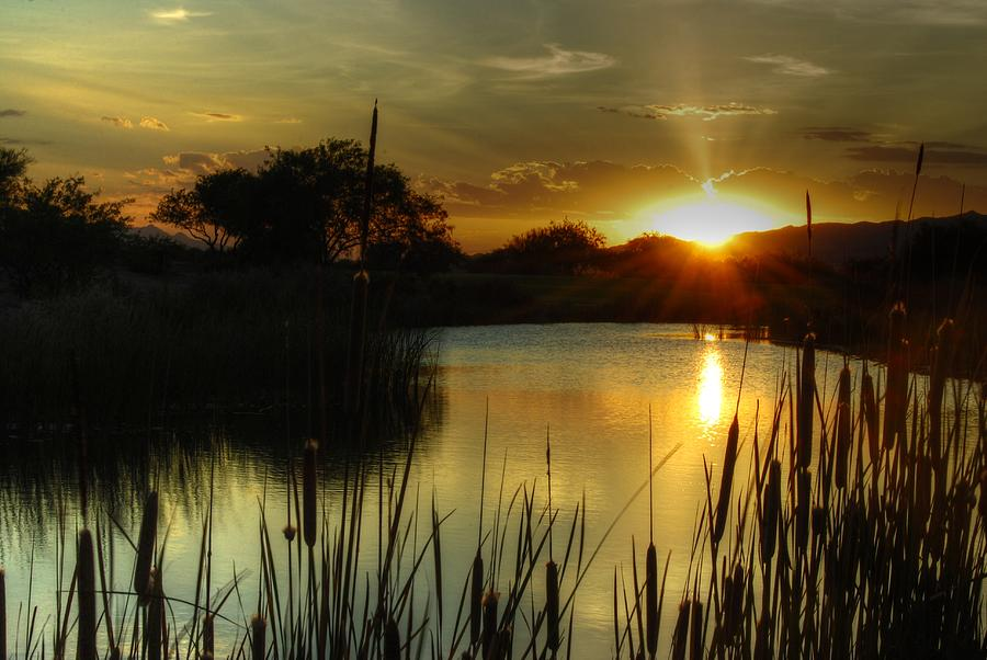Pond Photograph - Sunset And Cattails by Tam Ryan