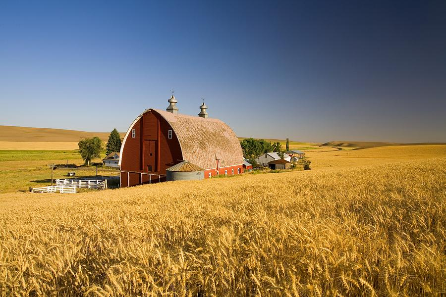 Sunset Barn And Wheat Field Steptoe Photograph By Craig Tuttle