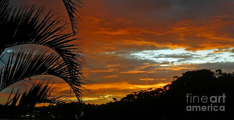 Sunset Photograph - Sunset Behind The Palms by Kaye Menner