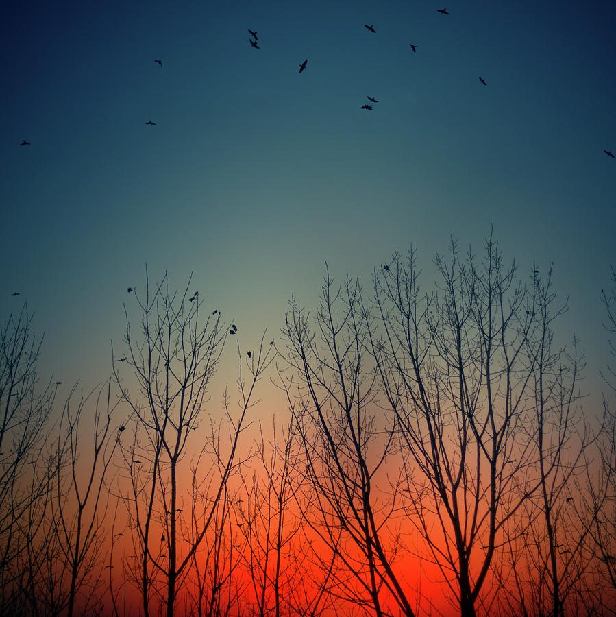 Square Photograph - Sunset Behind Trees by Luis Mariano González