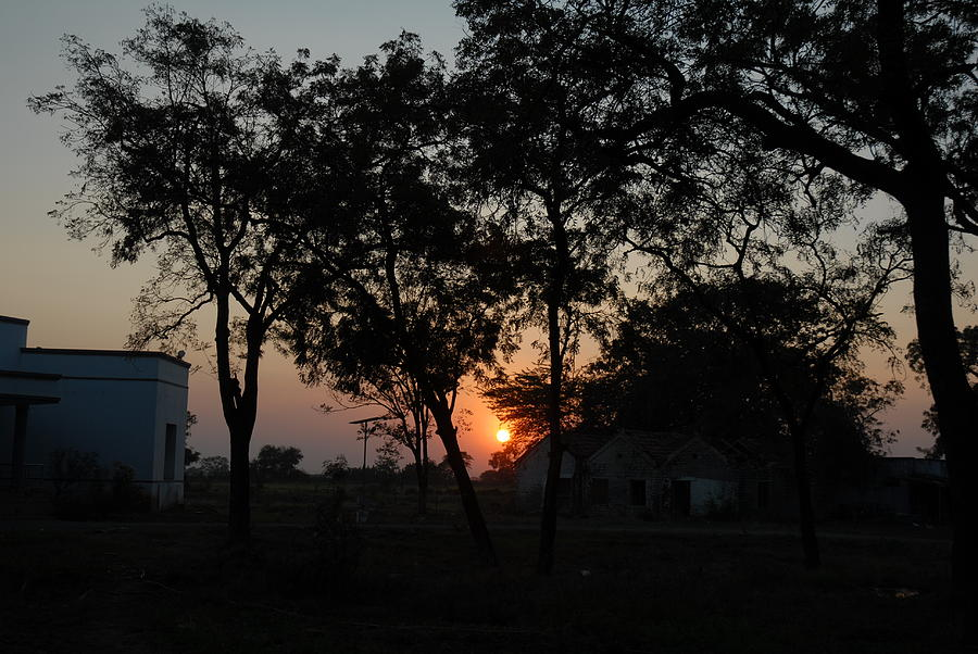 Sunset Behind Trees Photograph by Johnson Moya