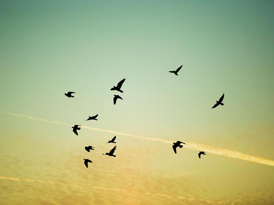 Horizontal Photograph - Sunset Birds by Sarah Palmer