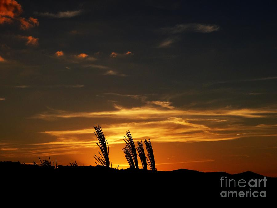Sunset Photograph - Sunset by Crystal Joy Photography