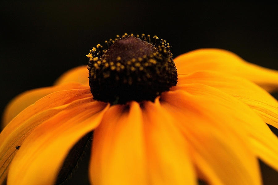 Flower Photograph - Sunset by Gabriel Calahorra