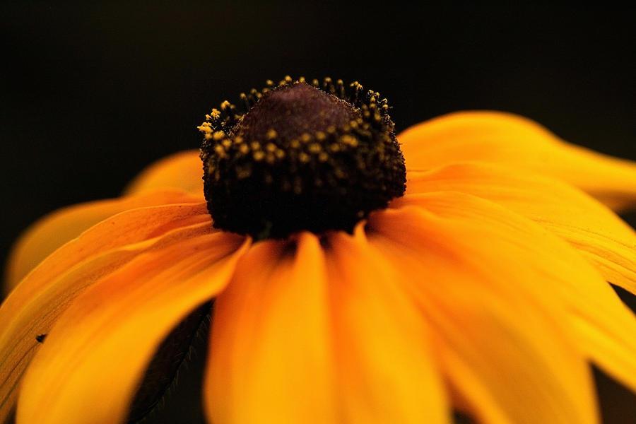 Flower Photograph - Sunset by Gabriel Calahorra