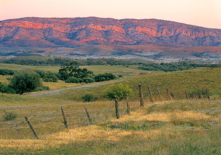 Horizontal Photograph - Sunset Glow On Flinders Ranges In Moralana Drive, South Australia by Peter Walton Photography