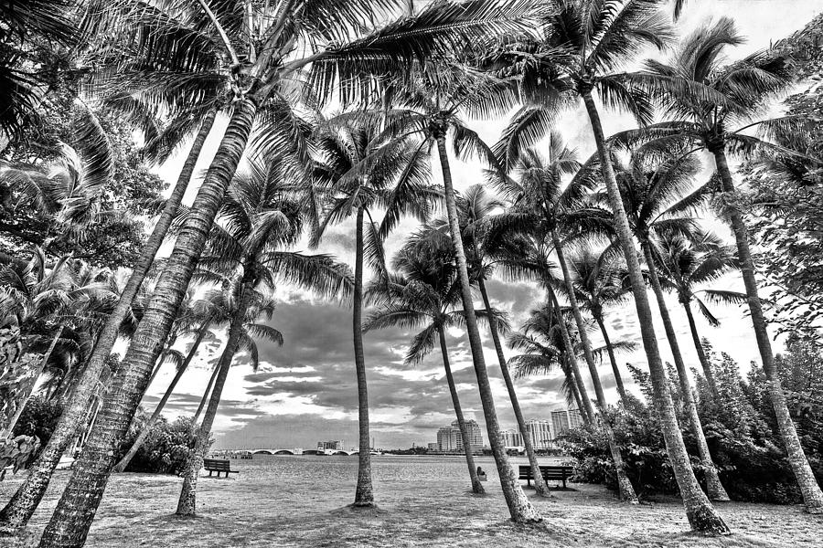 Boats Photograph - Sunset Grove At Palm Beach by Debra and Dave Vanderlaan