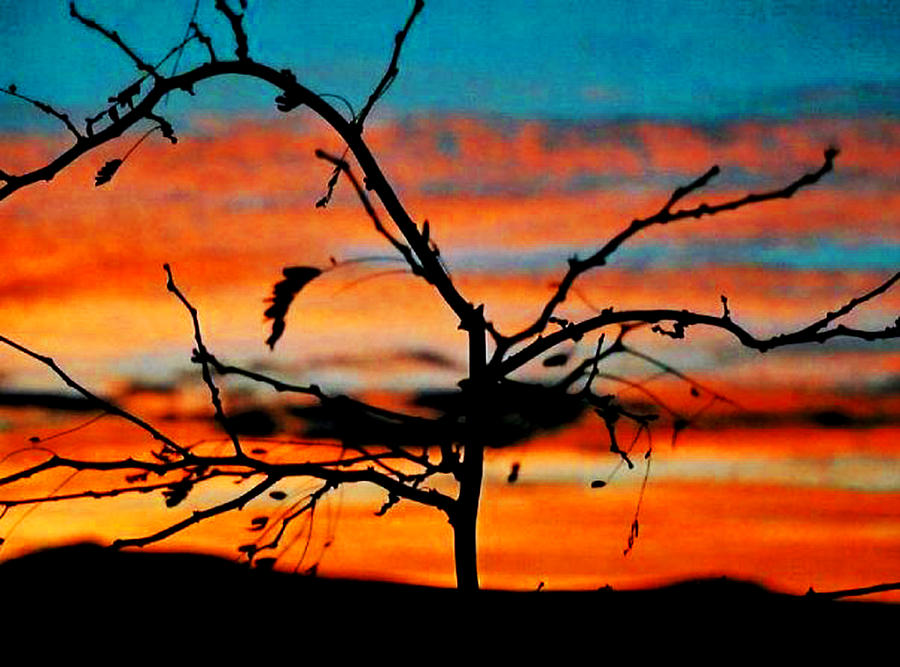Sun Photograph - Sunset In Nevada by Stephani JeauxDeVine