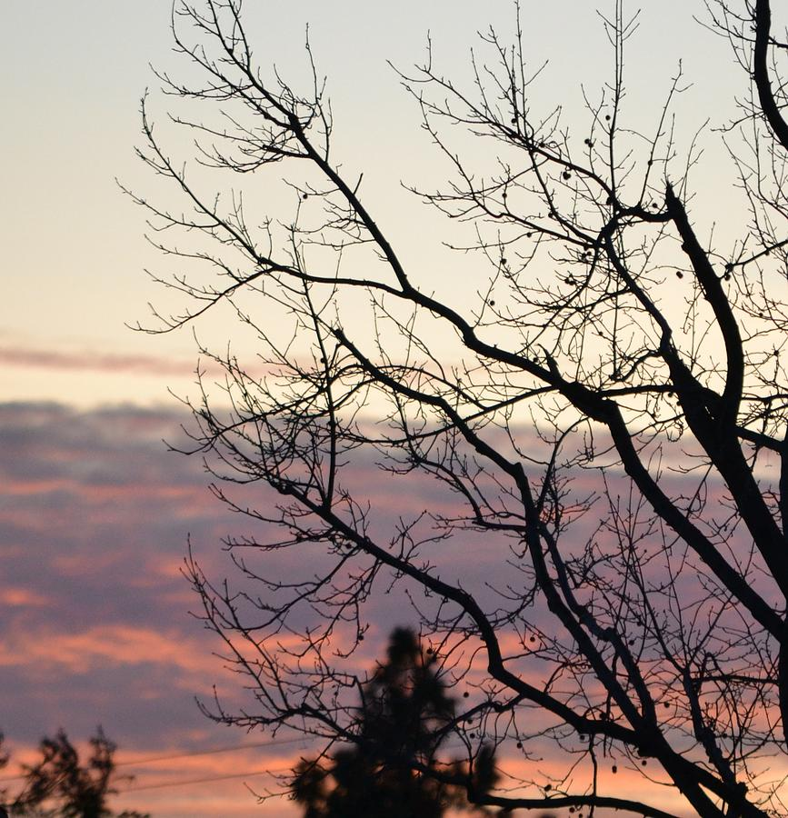 Tree Photograph - Sunset Of Winters Beauty by Naomi Berhane