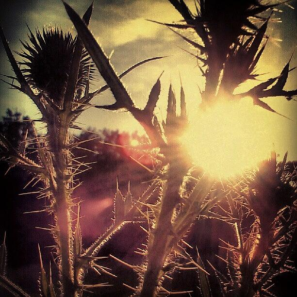 Summer Photograph - Sunset On A Field  by Tina Marie