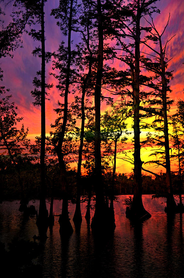 Swamp Photograph - Sunset On Horseshoe Lake 1 by Marty Koch