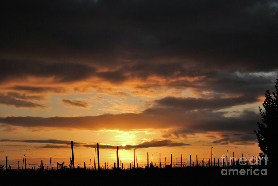 Vineyards Photograph - Sunset On The Vineyards by Nancy Chambers