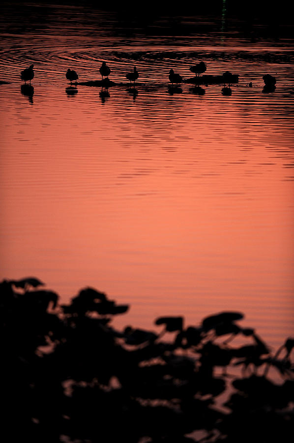 Water Photograph - Sunset Over Carnegie Lake by Frank DiGiovanni