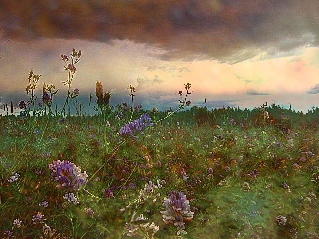 Meadow Photograph - Sunset Over Meadow by Shirley Sirois