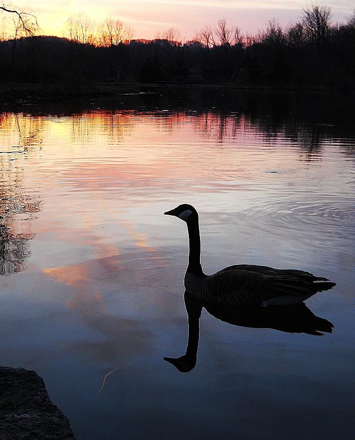 Lake Photograph - Sunset Serenity by Shelley Patten-Forster