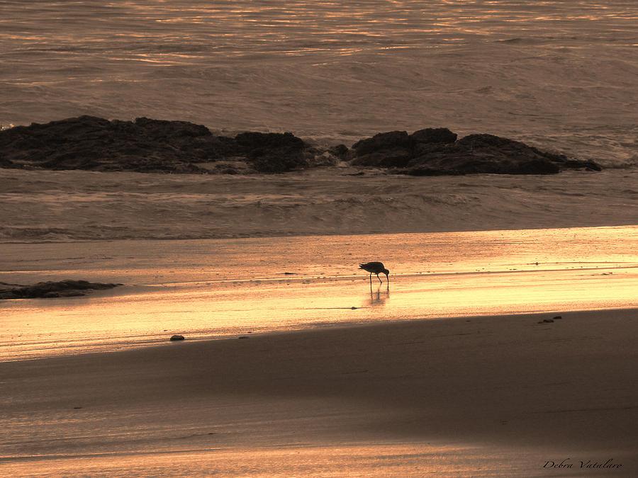 Sunset Shimmer Beach Photograph - Sunset Shimmer Beach by Debra     Vatalaro