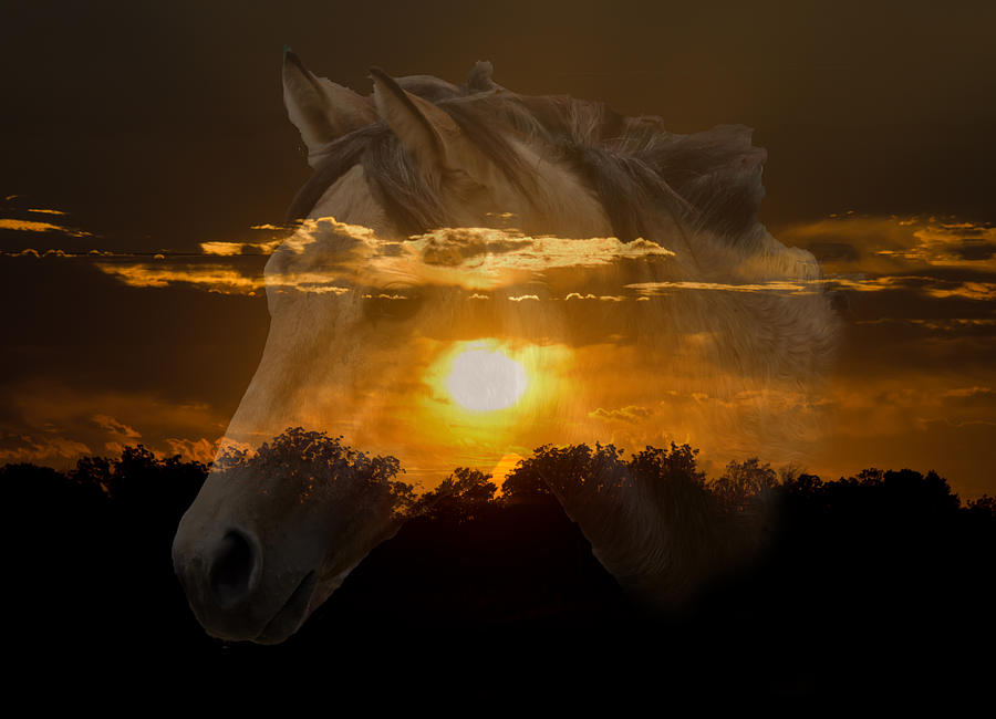 Horses Photograph - Sunset Silhouette by Lisa Moore