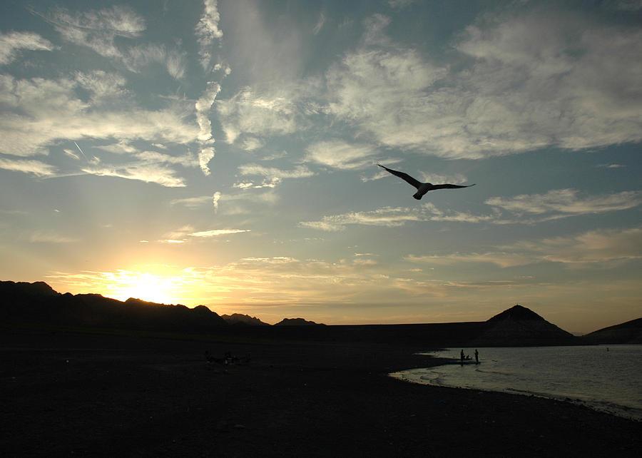 Bird Photograph - Sunset Soaring by Jonathan Schreiber