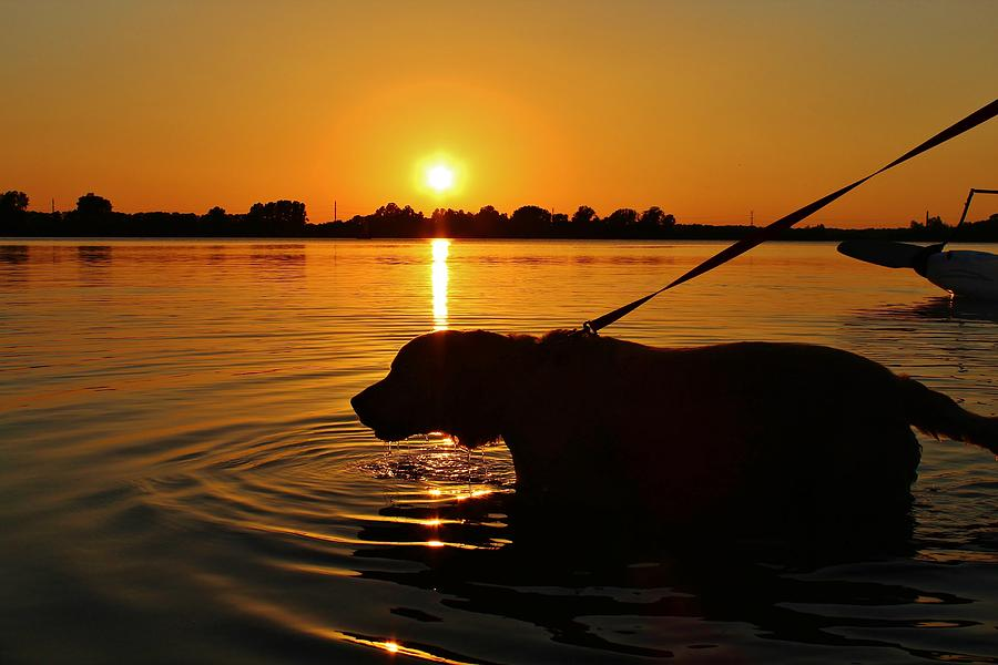 Dog Photograph - Sunset Swim by Alexander Spahn