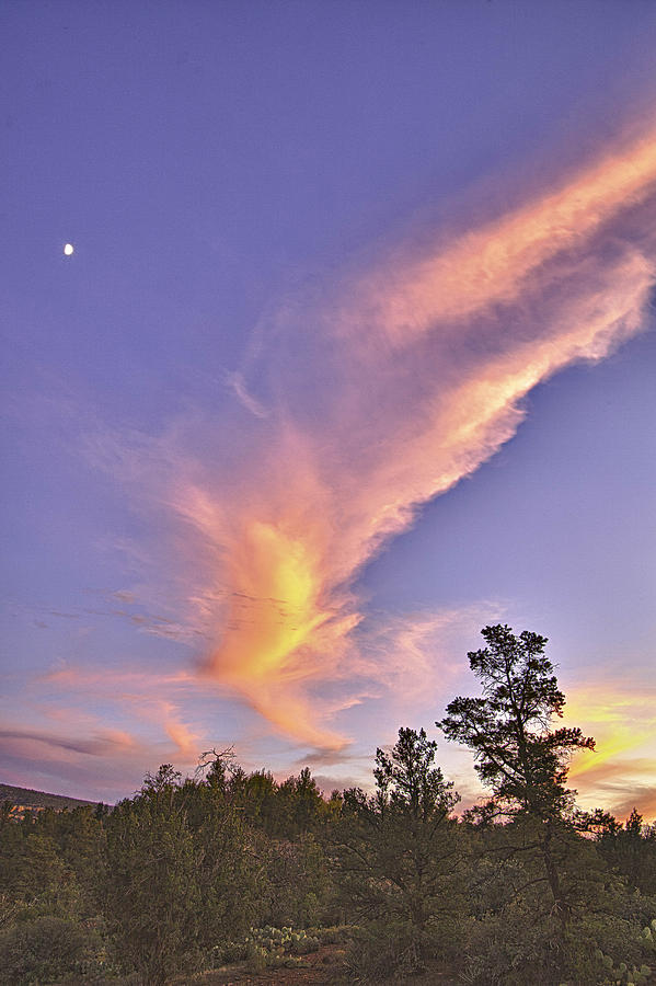 Sunset Photograph - Sunset Swoosh by Forest Alan Lee