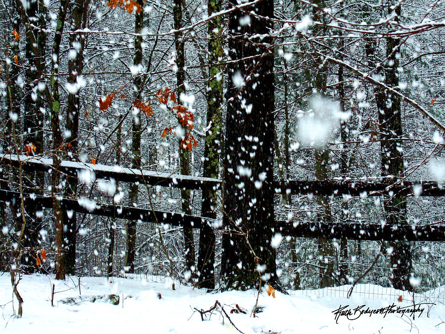 Landscape Photograph - Supersized Snowflakes by Ruth Bodycott