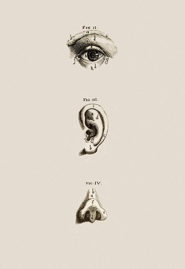 Surface Anatomy Of The Eye, Ear And Nose Photograph by Mehau Kulyk