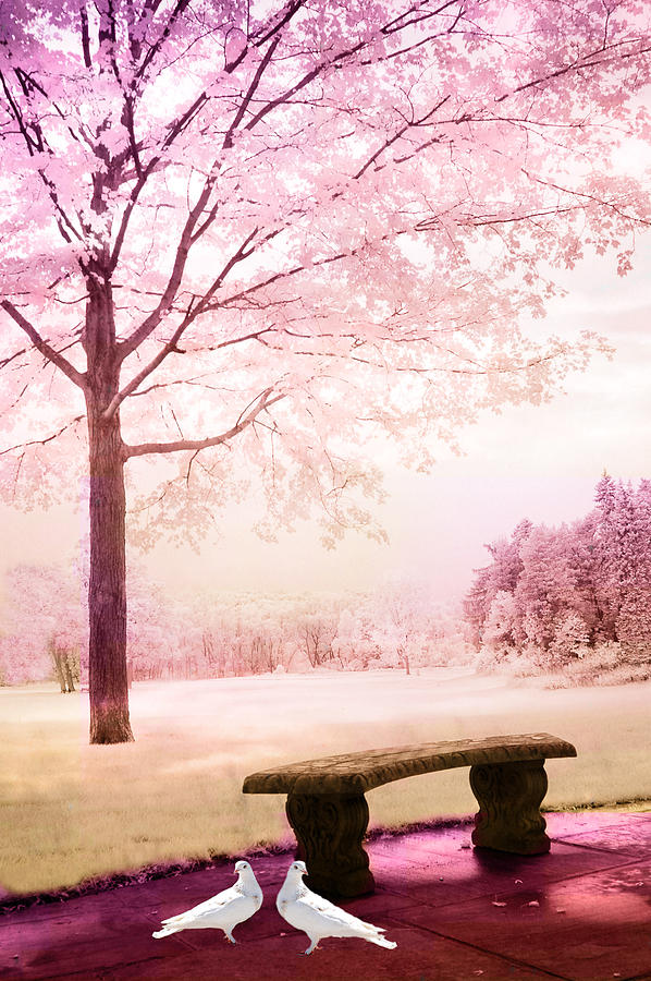 Surreal Fantasy Park Bench With White Doves Photograph By