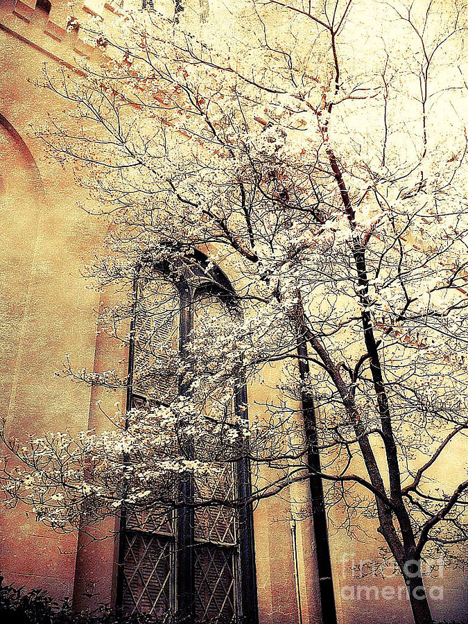 Surreal Trees Photograph - Surreal Gothic Church Window With Fall Tree by Kathy Fornal