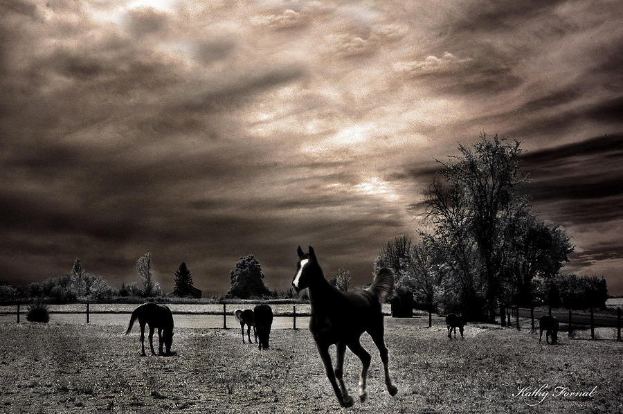 Black And White Horse Photograph - Surreal Horses Infrared Nature  by Kathy Fornal