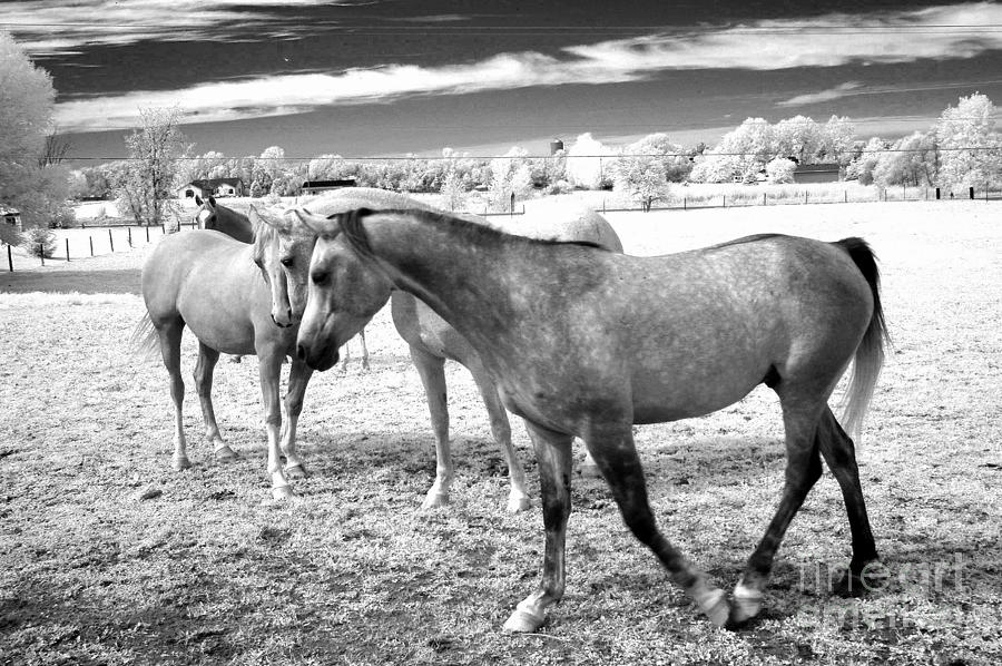 Surreal infrared black white horses landscape photograph by kathy fornal