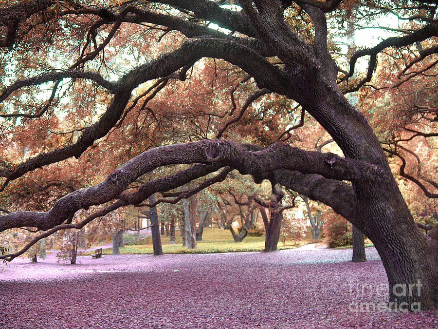 Fall Nature Scene Photograph - Surreal Old Oak Tree South Carolina Fall Colors by Kathy Fornal