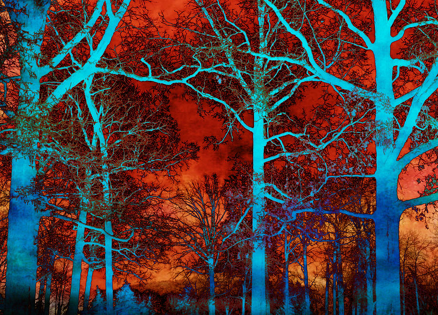Surreal Fantasy Art Prints Photograph - Surreal Orange Sky With Blue Trees Landscape by Kathy Fornal
