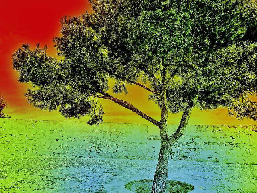 Surreal Tree I. Photograph