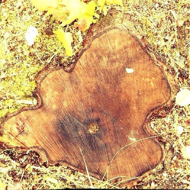 Surrealism Tree Stump Photograph by Kln Sink