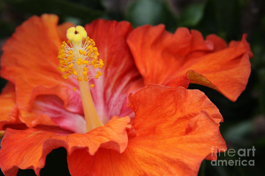 Aloha Photograph - Surrender by Sharon Mau